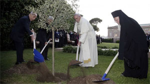 Pope Francis plants olive tree.